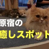 原宿・竹下通りにある猫カフェ「MOCHA(モカ)」がおすすめ! デートでも一人でもOK