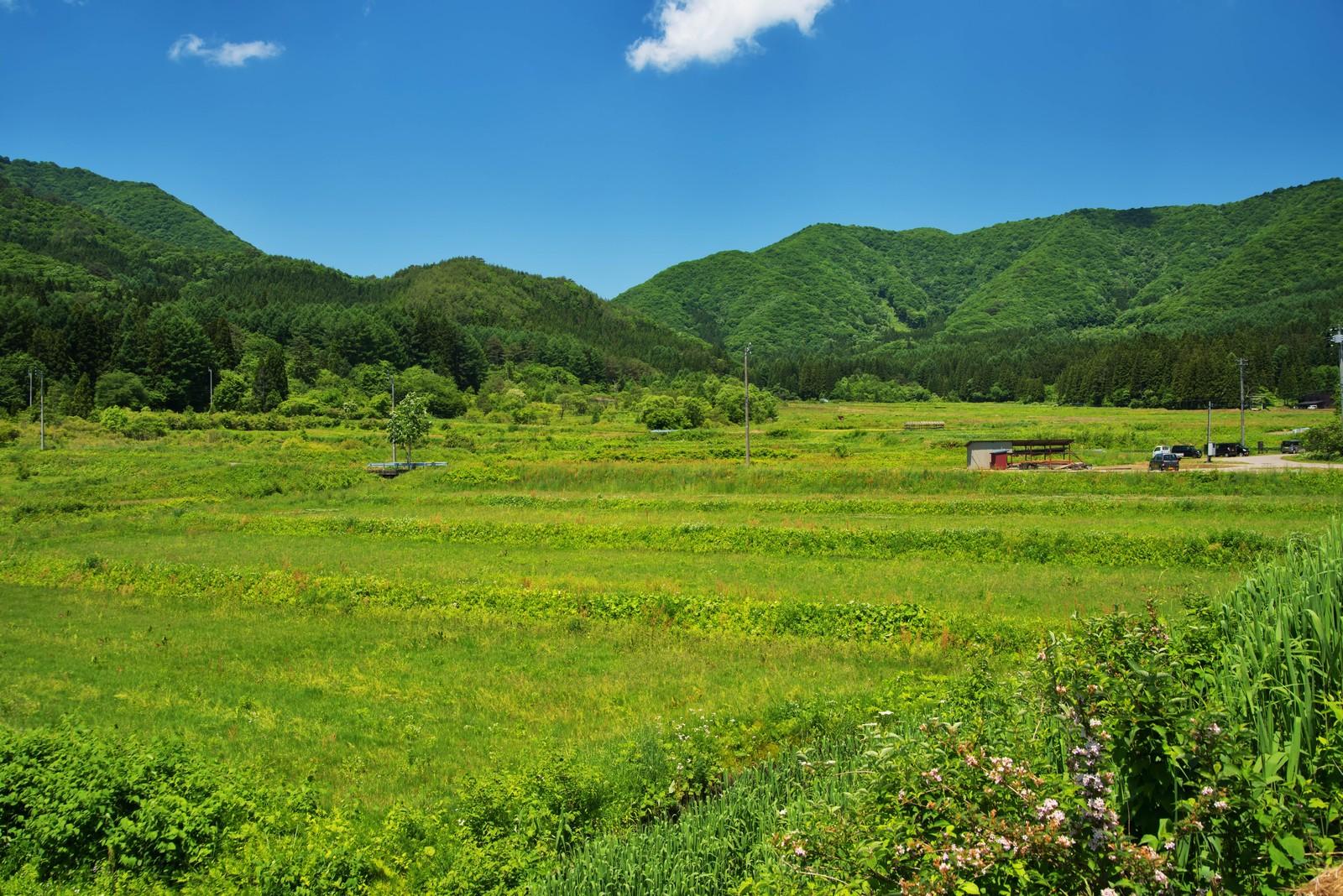 東京から田舎に帰省して感じたこと。ダラけなくてすむ都会も好きだ。